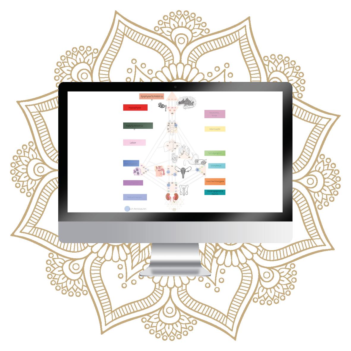 Selbstentdeckung Human Design Genetik PDF-Einblick in den Kurs